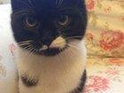 Изображение в   Безумно любвиобильная котенок-девочка) Китлер в Москве 0