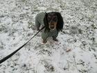 Увидеть foto  Квартирная передержка собак в Москве 38476894 в Москве