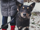 Фото в   Предположительно 3 года - собака молодая, в Москве 0
