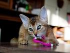Изображение в Кошки и котята Продажа кошек и котят Яркие комочки позитива ищут себе новый дом в Москве 15000