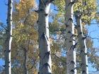 Смотреть фото  Обрезка плодовых деревьев, расчистка и благоустройство участков, обработка от клещей, покос травы, обработка от сорняков, удаление деревьев, бурение скважины на 38648831 в Голицыно