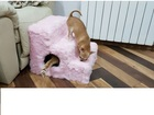 Скачать бесплатно foto  Ступени прикроватные для мелких пород собак 38735424 в Ульяновске