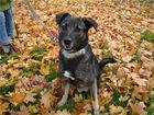 Фото в Собаки и щенки Продажа собак, щенков Добрый, ласковый, молодой пес по имени Дружок в Москве 100