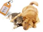 Скачать бесплатно foto  Услуги ветеринара Бося, товары для животных Кострома 38802949 в Костроме