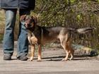 Изображение в   Граф – молодой активный пес, который будет в Москве 0