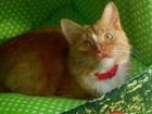 Изображение в   Этот красивый, ласковый котик еще месяц назад в Москве 0
