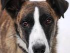 Фотография в   Пристраиваю необыкновенную, особенную собаку. в Москве 0