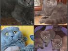 Скачать бесплатно foto Вязка Вязка с котами 39525005 в Москве
