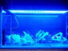 Уникальное foto Аквариумы Аквариум бу с подсветкой и декор 39724418 в Москве