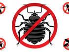 Новое изображение  Услуги по обработке от насекомых и грызунов, 39807325 в Ростове-на-Дону