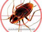 Смотреть фото Разное Дезинфекция (травля, выведение) тараканов в квартирах, магазинах, офисах, 39893388 в Москве