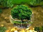 Свежее foto  Семинар-практикум Российская неделя экологии 2017 41090851 в Москве