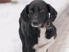 Скачать фото  Молодой пес Чапулик в добрые руки, 46606606 в Москве