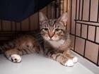 Котик Чук ищет семью и тепло