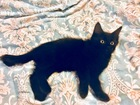 Свежее фото  Четверо очаровательных котят в добрые руки, в дар, 49704492 в Москве