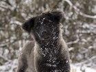 Новое фото  Красивый щенок Саманта ищет дом! 55547971 в Москве