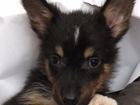 Скачать изображение  Очаровательный щенок Ушастик ищет дом, 55692595 в Москве