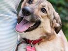 Скачать фото  Очаровательная собака Джесс в добрые руки, 56114672 в Москве