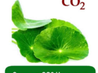 Просмотреть foto  Оптом Экстракт СО2 Центеллы, 1 кг 58085107 в Алагире