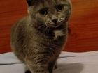 Уникальное изображение  Молоденькая кошечка Маша в добрые руки, 63564797 в Москве