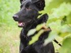 Увидеть фотографию  Красивый пёс Кекс в добрые руки, 66604109 в Москве