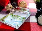 Новое фото  Муравьиная ферма (формикарий) + муравьи 67392847 в Нижнем Новгороде