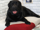 Просмотреть foto Зоомагазины Лежак для собак - Бежевый с красным 67949818 в Москве