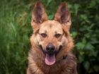 Скачать бесплатно фотографию  Пёс Бруно в добрые руки, В дар 68266786 в Москве