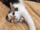 Новое фото  Кошечка по имени Цветик мечтает о доме 68275310 в Зеленограде