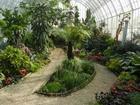 Увидеть изображение  Озеленение интерьера, Зимние сады 68311455 в Москве