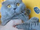 Новое изображение  Вязка с лиловым вислоухим котом 68357146 в Москве
