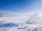 Скачать бесплатно изображение Земельные участки Участок сельскохозяйственного назначения 4 га 68556888 в Москве