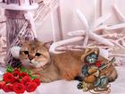 Увидеть изображение  Вязка шотланская Золотой тикированный страйт 68755832 в Москве