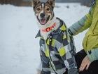 Новое фото  Красивый пес Сонник Джек ищет семью! 69051719 в Москве