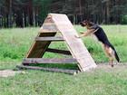 Скачать бесплатно foto  Дрессировка собак всех пород 69568510 в Иркутске