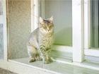 Уникальное foto  Очаровательная кошечка Туся ищет дом, 70397387 в Москве