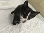 Скачать бесплатно изображение  Чудесный котенок Смоки ищет дом, 70574331 в Москве