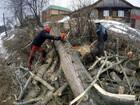Скачать бесплатно фото  Спил деревьев, обрезка, расчистка участка 74576555 в Курске