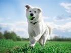 Свежее foto  Ищет дом молодой и невероятно красивый пёс Норман! 76010207 в Москве
