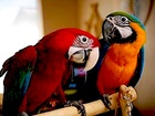 Смотреть фото Птички и клетки Ручные птенцы из питомников Европы 82605229 в Москве