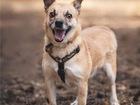 Свежее foto Отдам даром - приму в дар Маленькая собака Сури в добрые руки, 84279049 в Москве