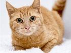 Смотреть фото  Рыжая кошка в добрые руки, 84288130 в Москве