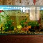 Аквариум-рыбы-тритон-аксолотль-черепашки
