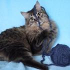 Котик Семен в заботливые ручки