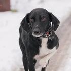 Молодой пес Чапулик в добрые руки