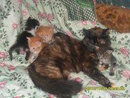 котята в дар домашние котята 2 мальчика рыжих 3девочки от домашних родителей в х