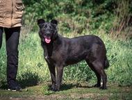 Чёрная собака в добрые руки Ищет дом невероятная красавица Берта!   По характеру