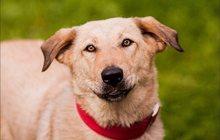 собака Агата готова охранять Ваши счастье и покой
