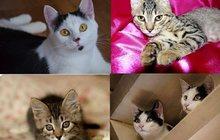 Красивые котята и подростки, разных окрасов, в дар