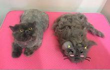 Колтуны у кота – стрижка или вычесать? Зоосалон для кошек